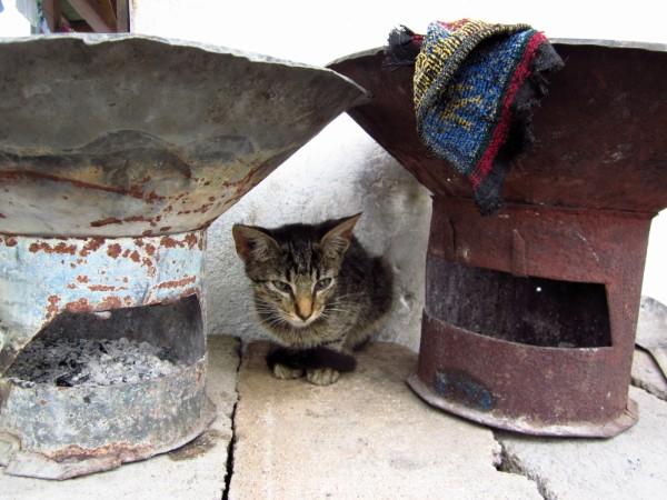 Cat Coal Pot