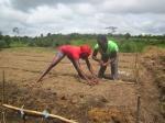 Hard Working GIrls Planting Beans
